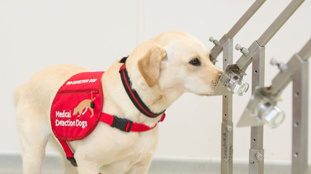 Medical Detection Dogs 3
